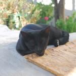 Nisyros | Katze